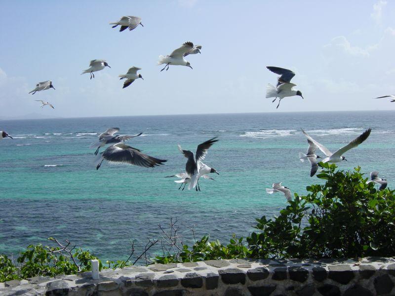 Остров Сент Винсент J8/SP7VC J8/SQ7OYL J8/SP3IPB J8/SP7TF J8/SP3CFM J8/K2RPF Туристические достопримечательности