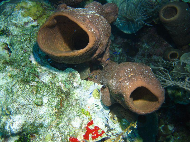 Остров Сан Андрес 5K0P Туристические достопримечательности Подводный мир.