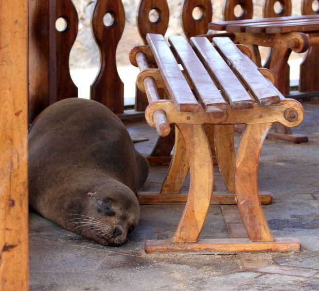 San Cristobal Island Galapagos Islands HC1HC/HC8 DX News