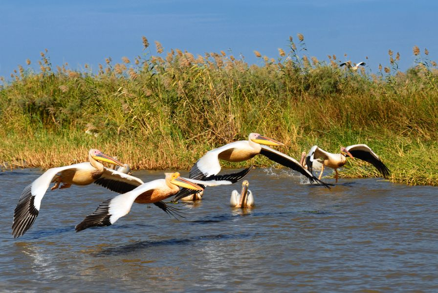 Senegal 6W7SK Tourist attractions spot Pelicans