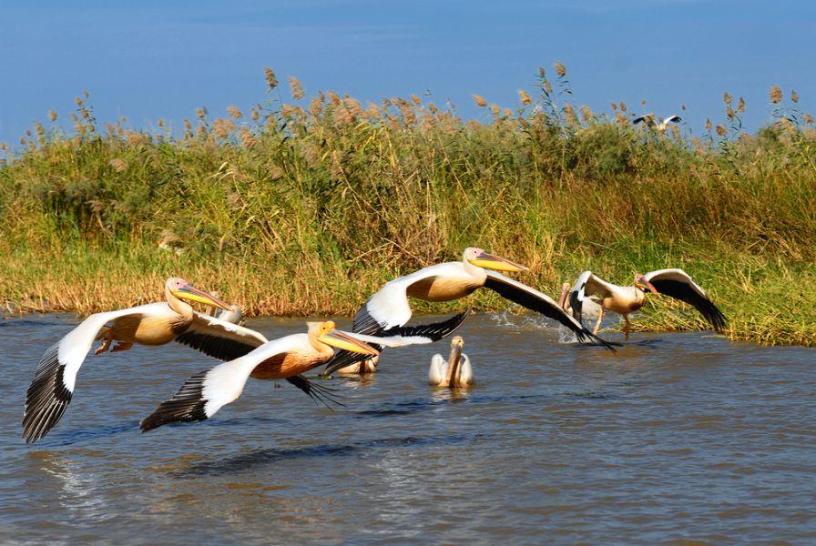 Сенегал 6W7SK Туристические достопримечательности Пеликаны