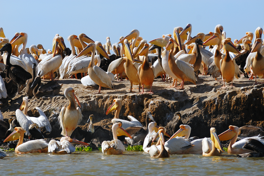 Сенегал DL7DF/6W Остров Пеликанов