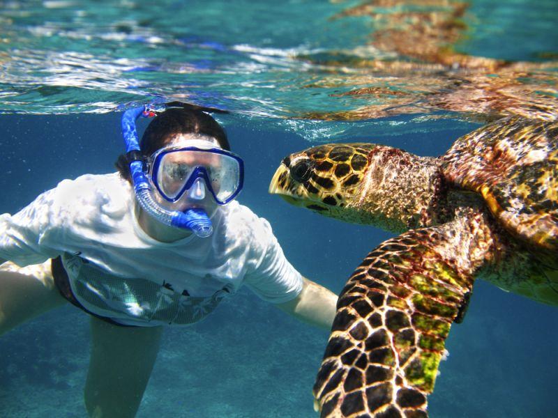 Seychelles S79CD DX News Hawksbill sea turtle.