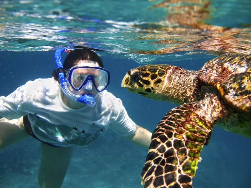 Seychelles S79CD DX News Hawksbill sea turtle.