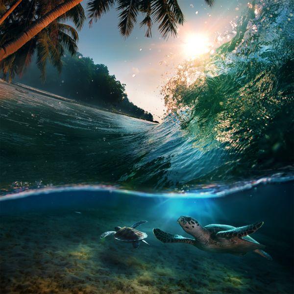 Сейшельские острова S79DPX