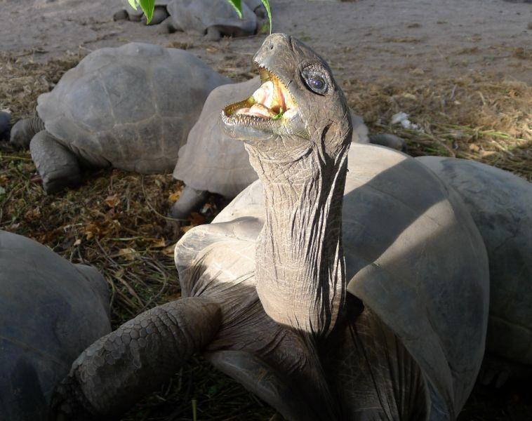 Seychelles S79HN DX News