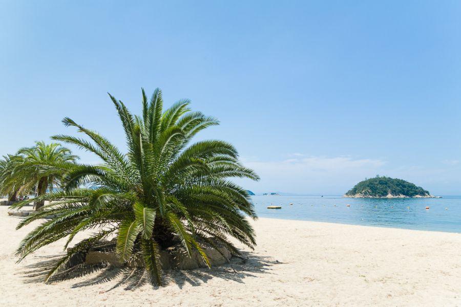 Shodo Island JI3DST/5 DX News