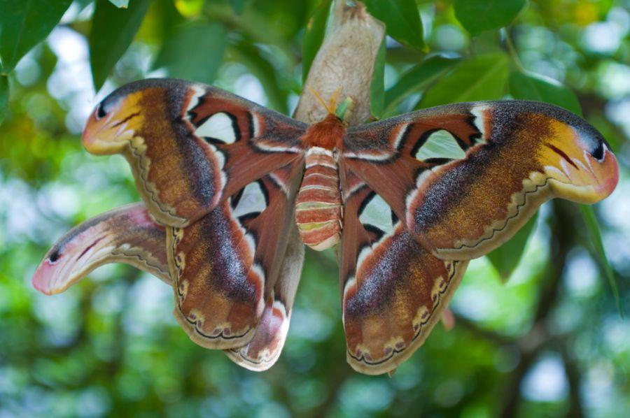 Sint Maarten PJ7BH DX News Butterfly Farm.