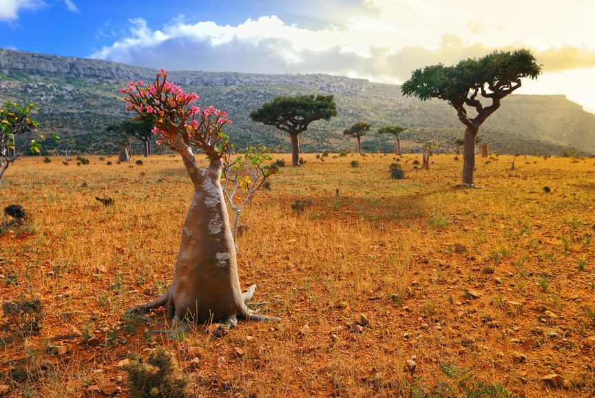 Socotra Island 7O2A Tourist attractions