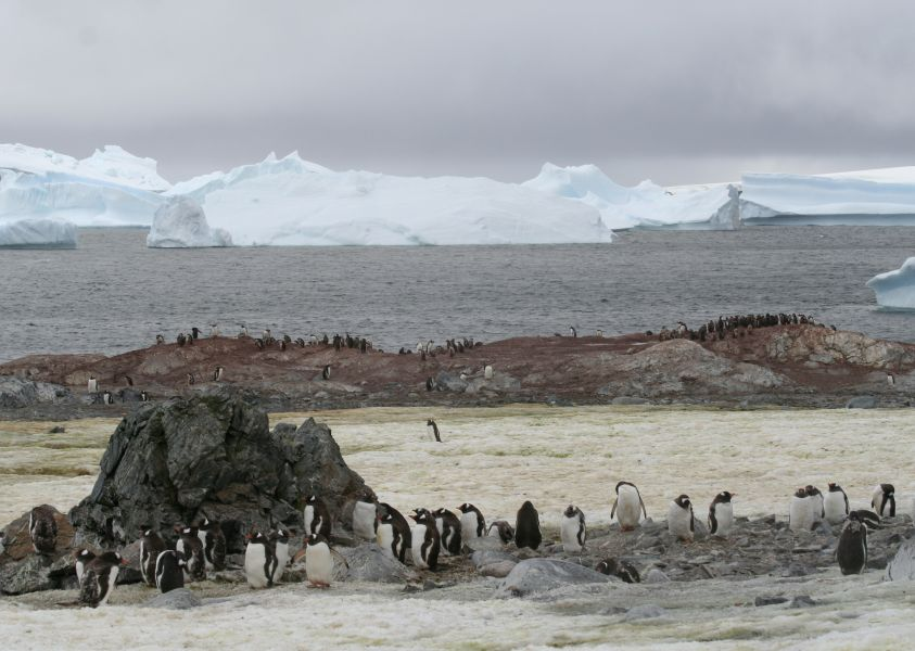 South Sandwich Islands VP8STI Tourist attractions spot