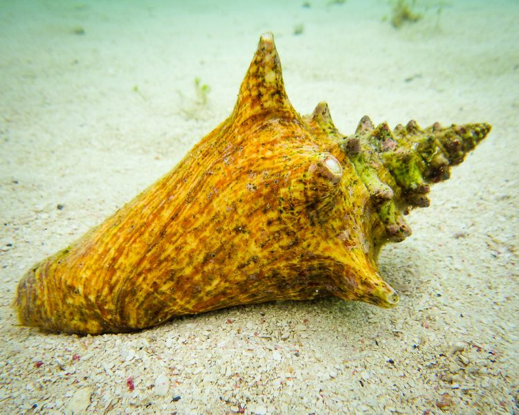 South Water Caye Island Belize V31JZ/P DX News Queen Conch.