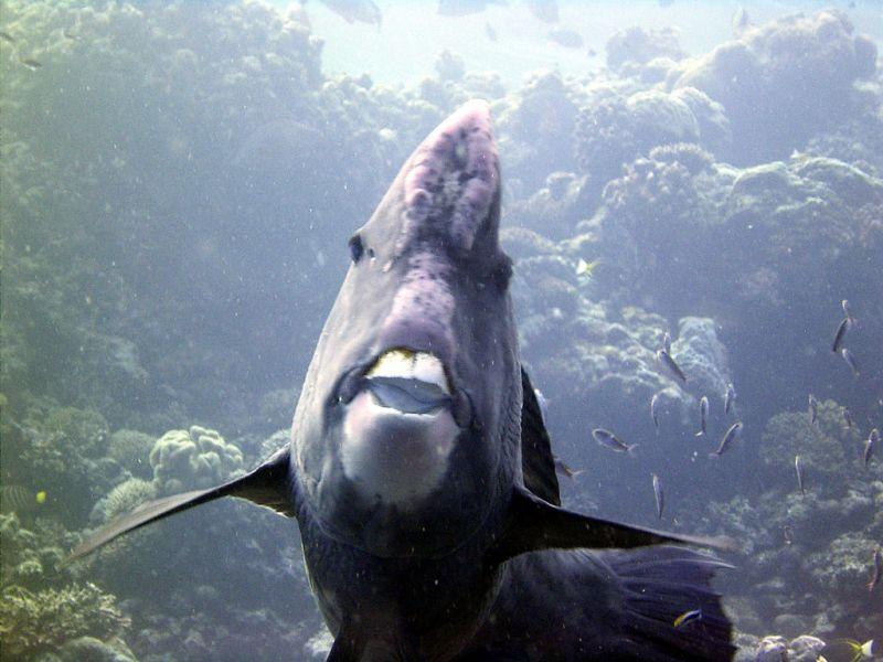 Остров Лаянг Лаянг Острова Спратли  9M0S Рыба попугай