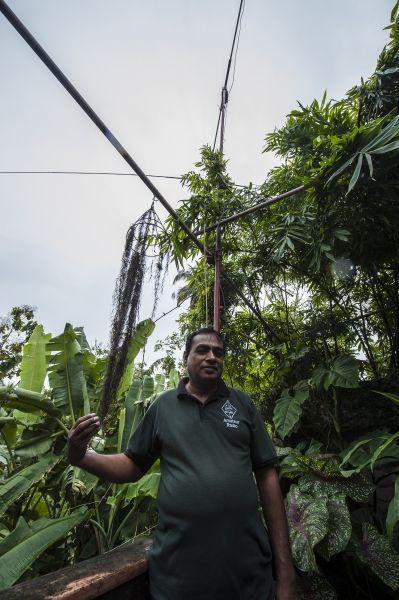 Шри Ланка 4S6WAS Сенарат, 4S6WAS, под мачтой самодельной вращающейся антенны на крыше дома.