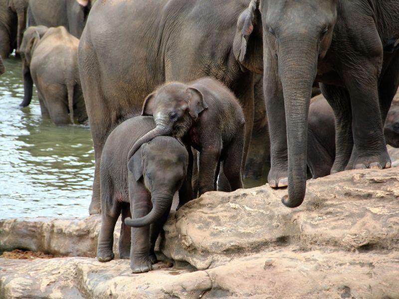 Шри Ланка 4S7GWG Туристические достопримечательности