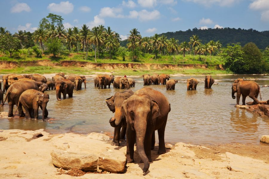 Sri Lanka 4S7YSG DX News Elephants