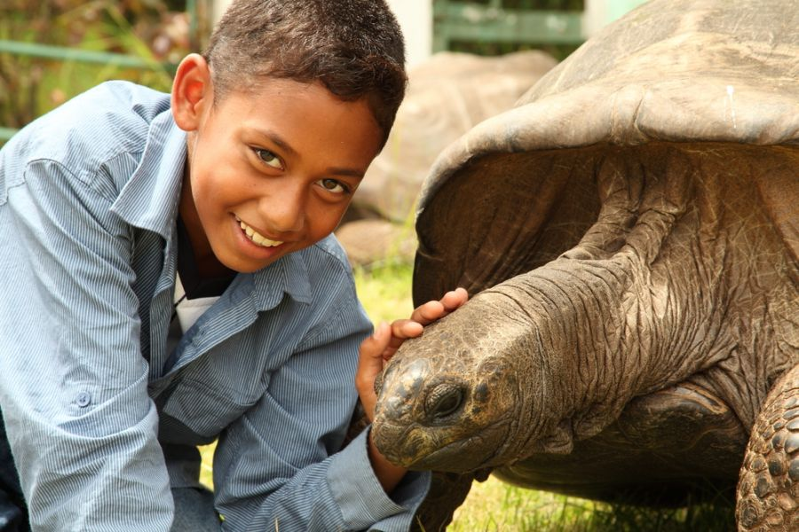 Saint Helena Island ZD7W Tourist attractions spot Boy visits Jonathan the tortoise on St Helena