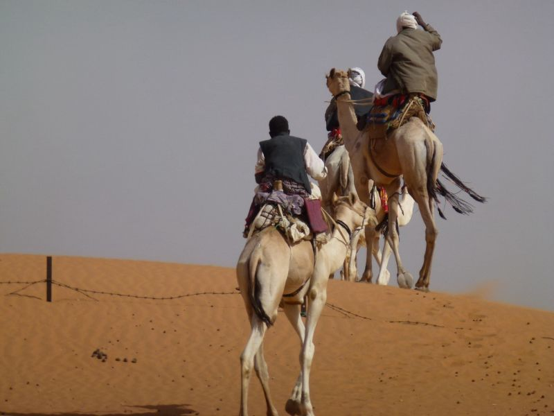 Судан ST2AC Верблюды