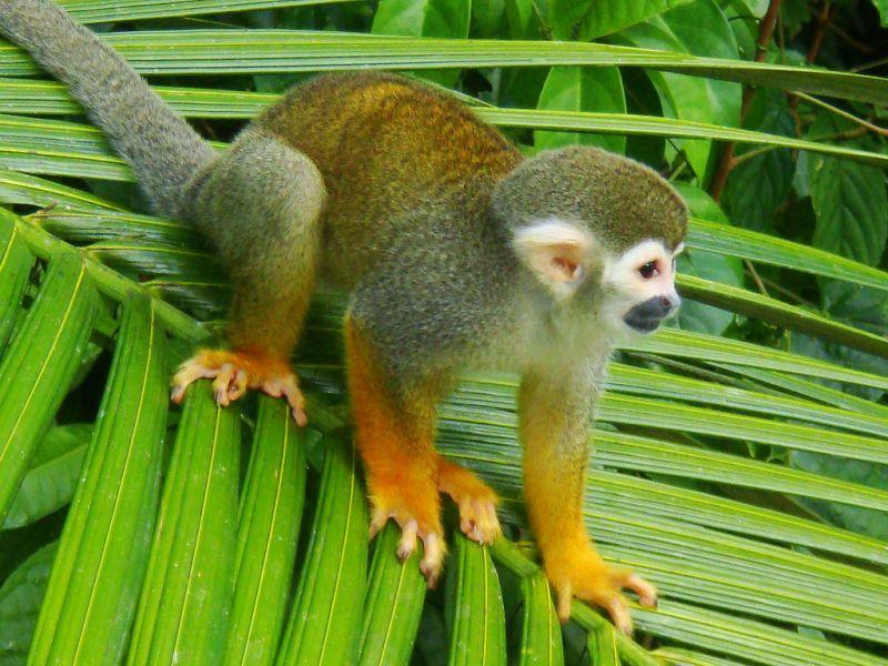 Suriname PZ5V