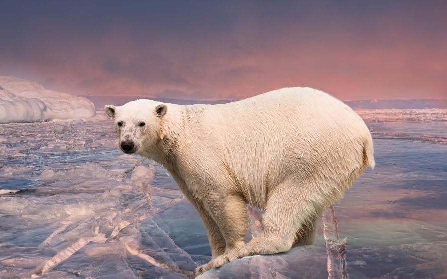 Шпицберген JW/DL2JRM Белый медведь