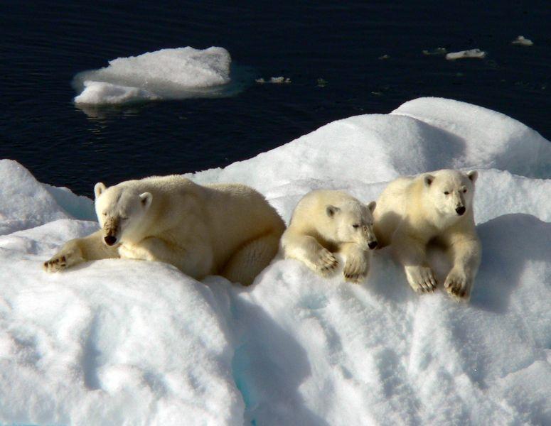 Svalbard JW/OX5M