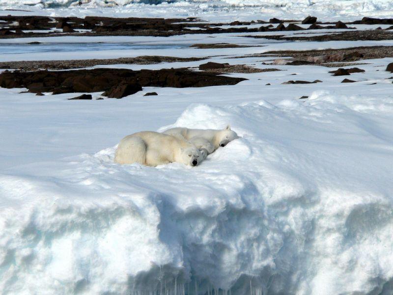 Шпицберген JW/DK1BT JW/DL4WK JW/DL7DF JW/DL7UFR Туристические достопримечательности Белые медведи спят.