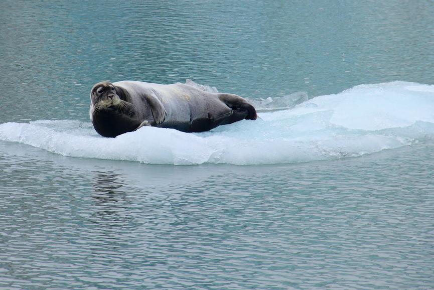 Шпицберген Свальбард JW2OTA Туристические достопримечательности Морской лев