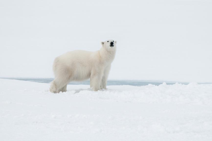 Svalbard JW2OTA