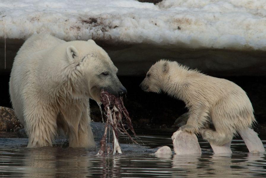 Svalbard JW/M0UNN Tourist attractions spot Whale for lunch, Holmiabukta.