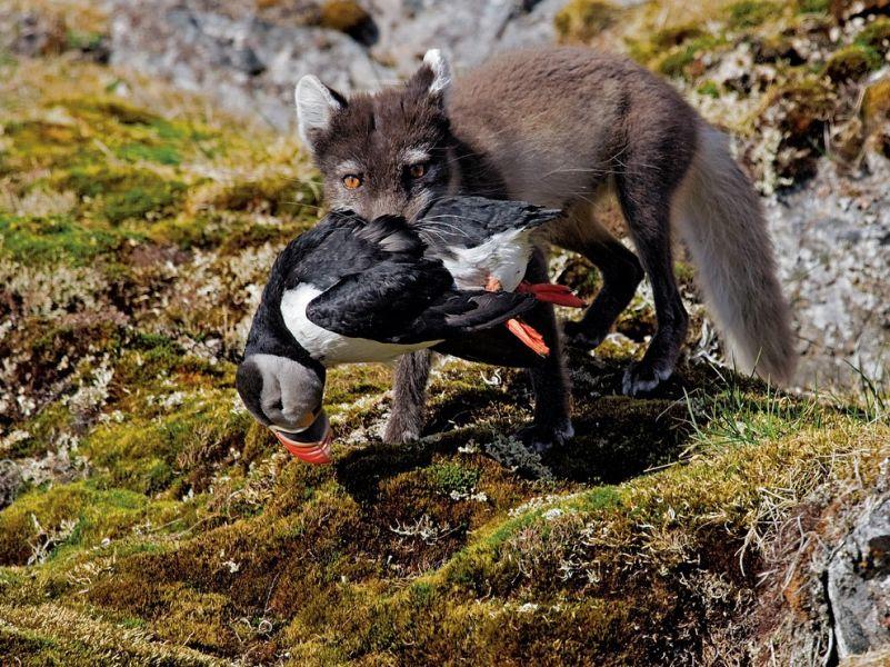 Svalbard JW/LB2LG DX News