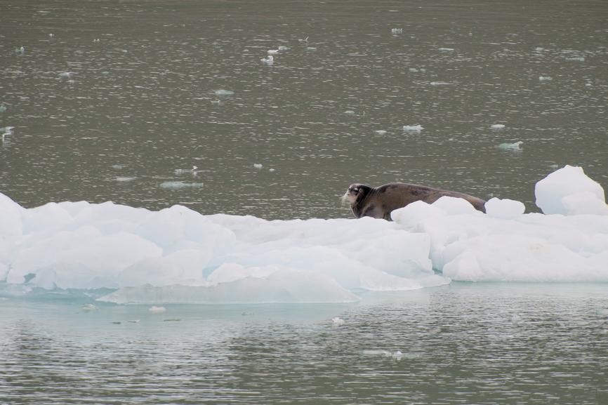Svalbard JW/SQ9DIE DX News