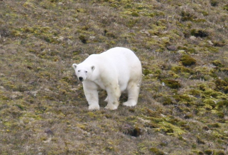 Svalbard JW6VDA