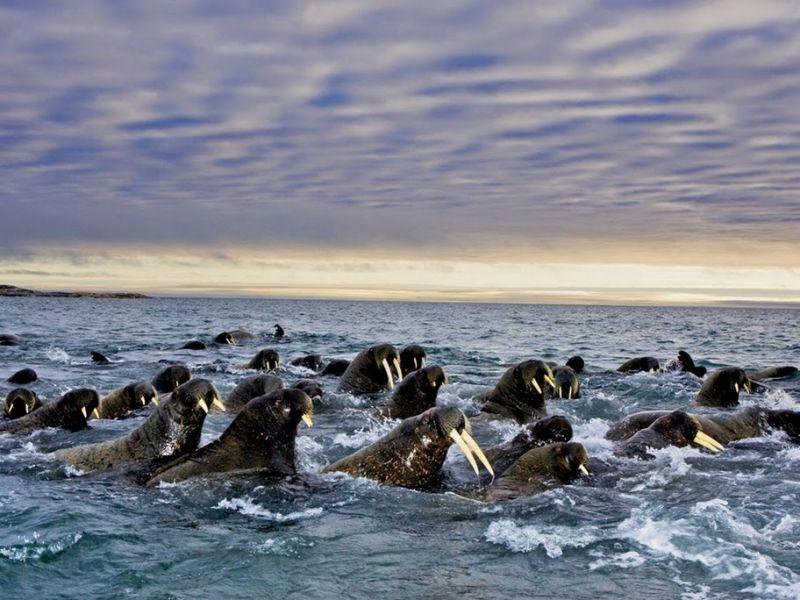 Svalbard JW6VDA Tourist Attractions
