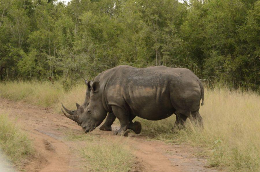 Свазиленд 3DA0MS Туристические достопримечательности Носорог.