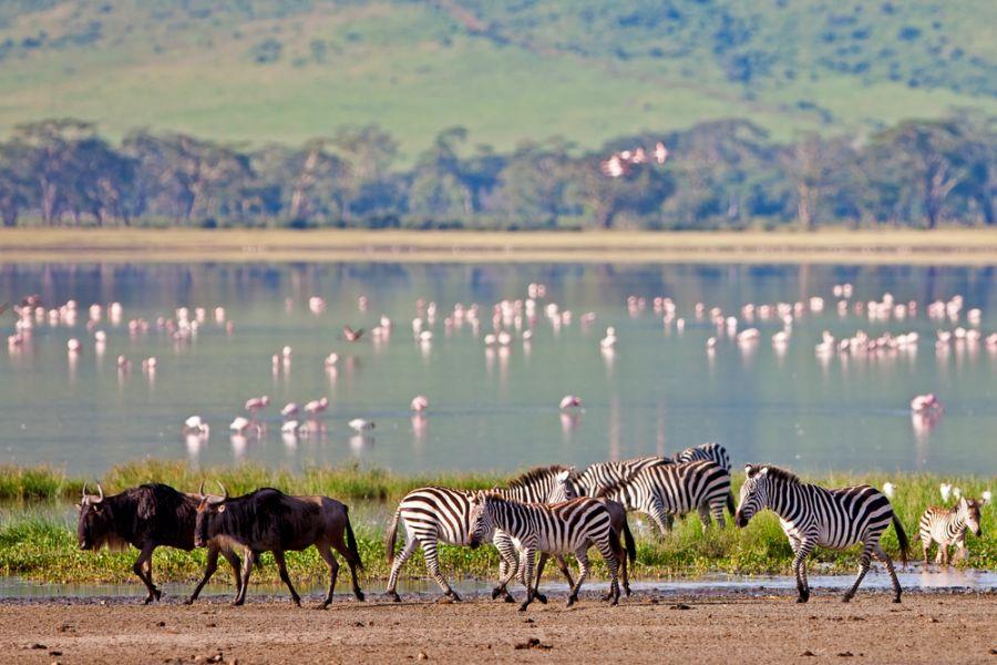 Танзания 5H2SF Зебры, антилопы гну, фламинго Озеро в кратере Нгоронго.
