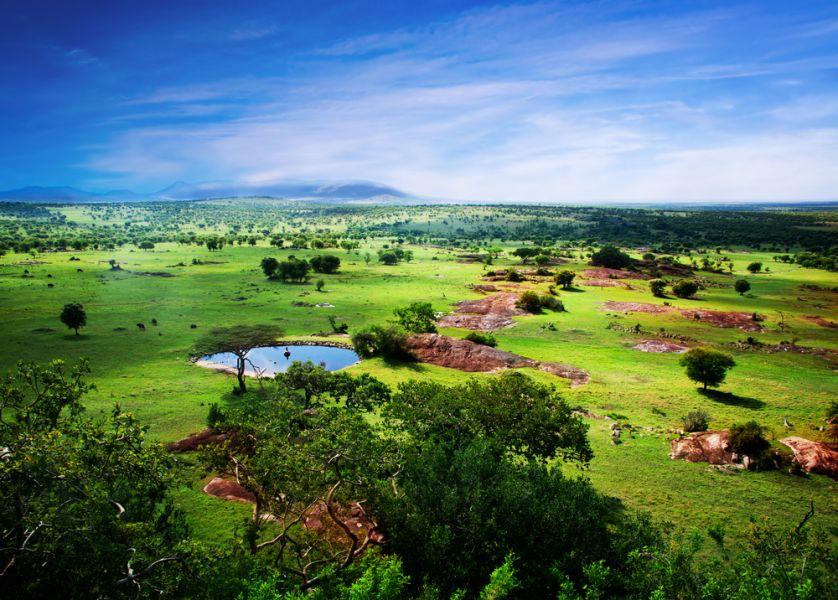 Танзания 5H3/IZ2RXF DX Новости Саванна в цвету