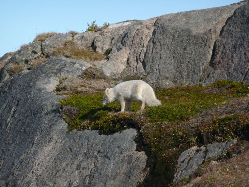 Tasiilaq Ammassalik Island Greenland OX/DL7DF OX/DJ6TF OX/DK1BT OX/DL7UFR Tourist attractions
