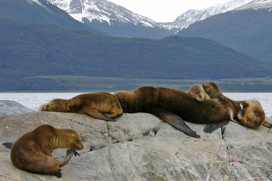 Tierra del Fuego Archipelago 3G9JA DX News