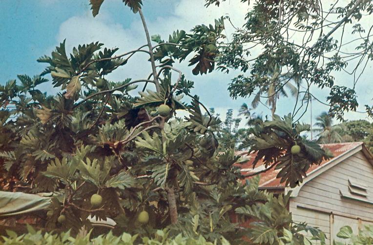 Королевство Тонга A35AC A35CO A35LT A35TR DX Новости Хлебное дерево