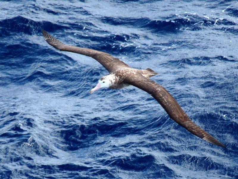 Tristan da Cunha Island ZD9ZS