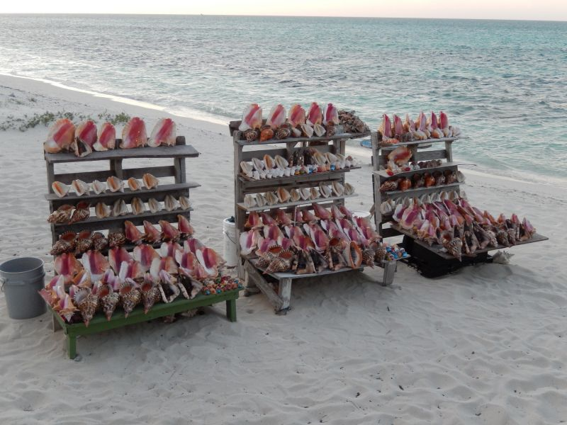 Turks and Caicos Islands VP5H Tourist attractions spot Shells at The Conch Shack.