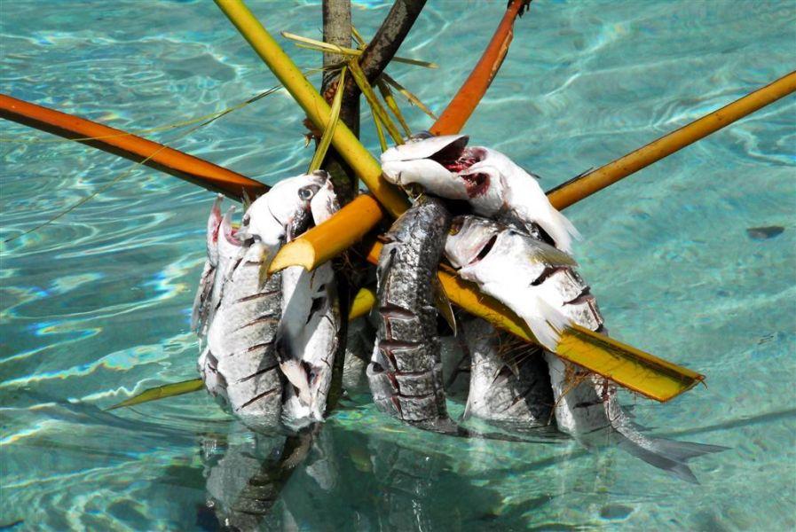 Tuvalu T2AQ T2QR DX News
