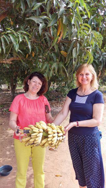 Мозамбик Местные бананы