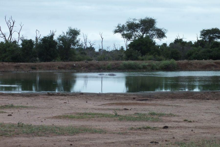Свазиленд Бегемоты