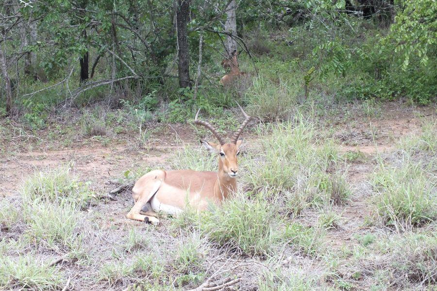 Свазиленд Знатные рога