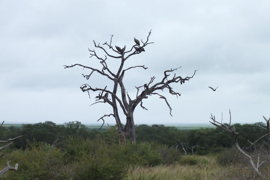 Свазиленд Типичная саванна