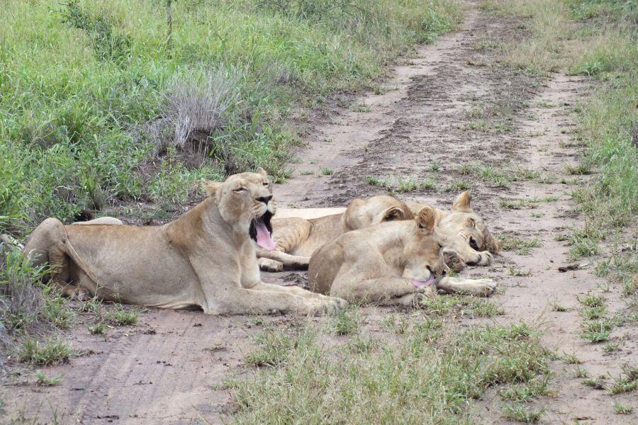 Свазиленд Время сиесты