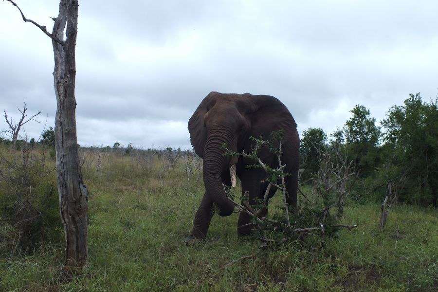 Свазиленд Слон