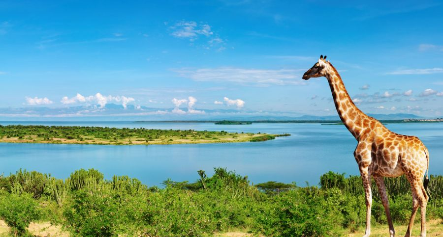 Uganda 5X2A African landscape with Nile River and giraffe
