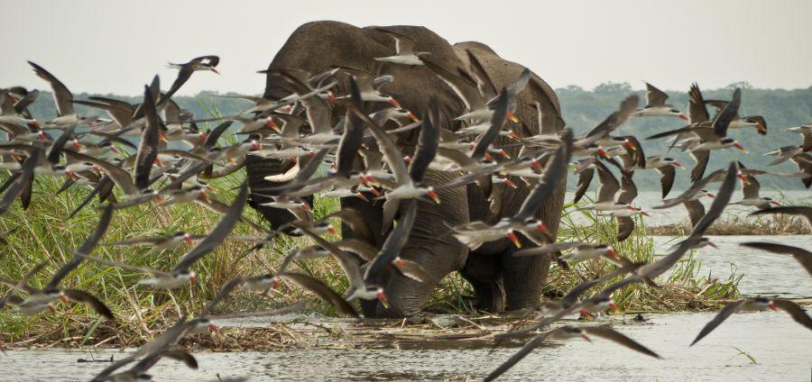 Uganda 5X7W Tourist attractions spot Queen Elizabeth National Park.