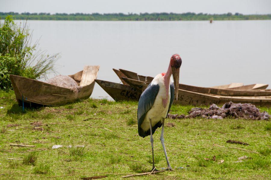 Uganda 5X7W Marabu.
